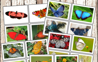 Montessori Colours of Butterflies Cards #montessori, #montessoriactivities, #preschoolactivities