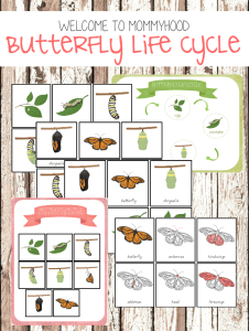 Life cycle of a butterfly printables #montessori