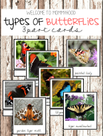 Types of butterflies freebie