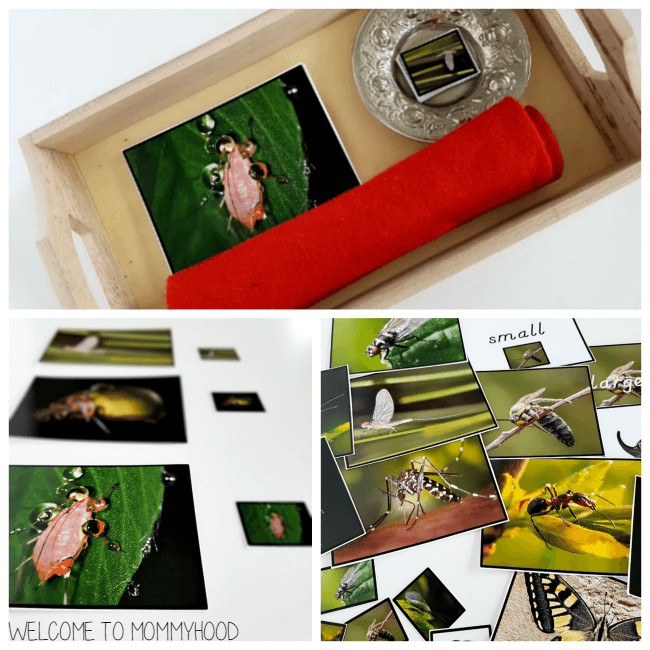 Insect activities for preschoolers: insect magnifying glass cards #montessoriactivities, #insectactivities, #presschoolactivities
