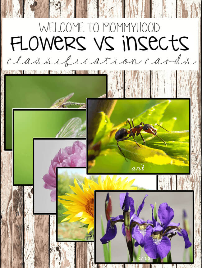 Montessori printables - flowers vs insects classification cards