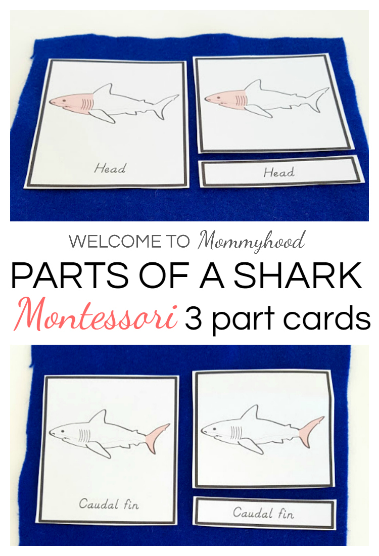 Shark activities: Montessori parts of a shark printables. Learn how to use these cards on the blog.