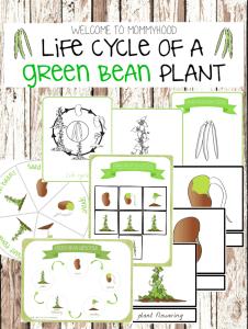 Montessori botany activities: strawberry life cycle ...