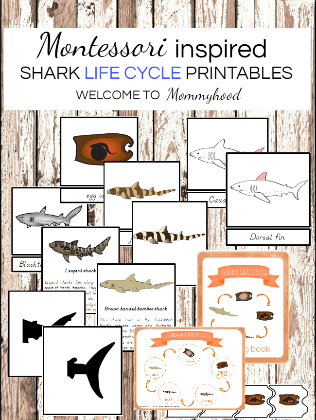 Montessori shark printables