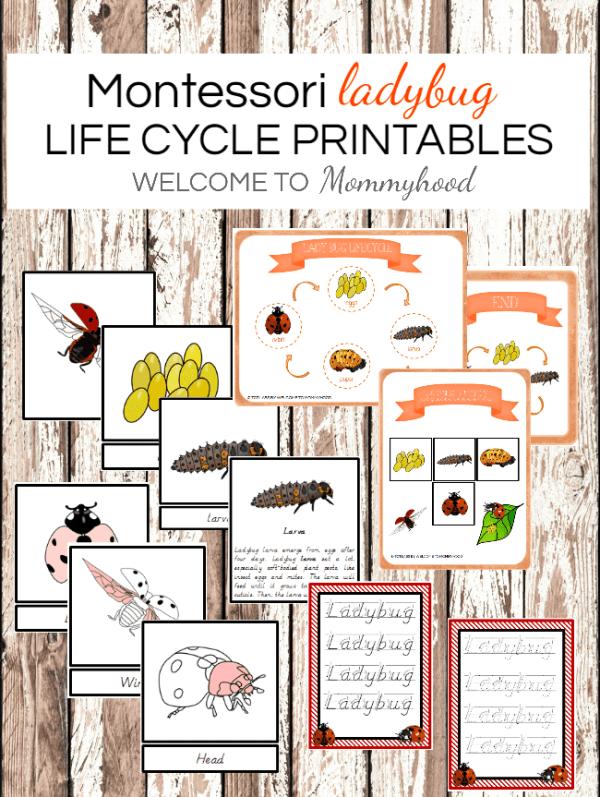 Montessori Printables: Ladybug lifecycle printables! Learn more about these Montessori printables on the blog! #montessori #montessoriprintables #lifecycle