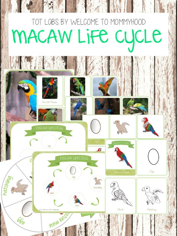 Montessori Life Cycle of a Bird Printables: macaw life cycle printables #montessoribirdprintables #montessoriactivities