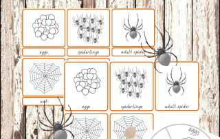 Montessori inspired spider life cycle printables #montessoriactivities #montessoriprintables #spiderlifecycle