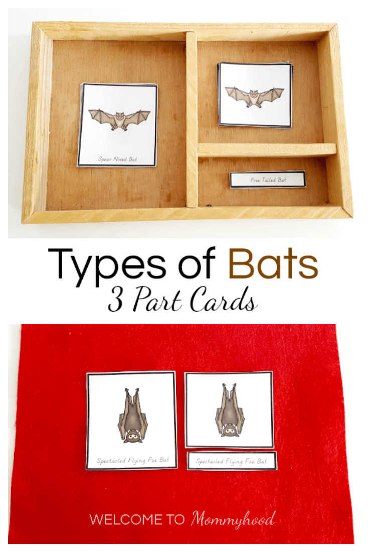 Montessori Halloween Activites Types of Bats Printables 3 Part Cards. Learn how to use this material and get your own copy here! #montessorirpintables #montessoriactiviteis