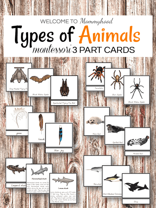 Types of animals Montessori 3 part cards