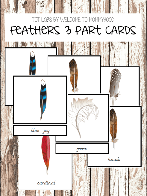 Montessori Feathers Cards #montessoriprintables #montessoriactivities