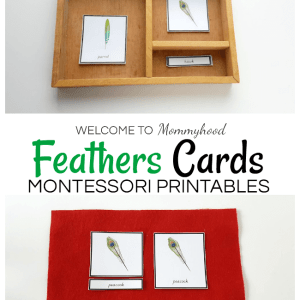 Montessori feathers 3 part cards - birds activities for kids #montessoriprintables #kidsactivities #montessoriactivities