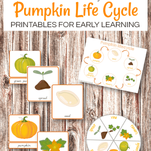 Montessori Inspired Pumpkin life cycle printables #thanksgivingprintables #thanksgivingactivities