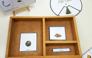 Montessori life cycle of a Christmas Tree