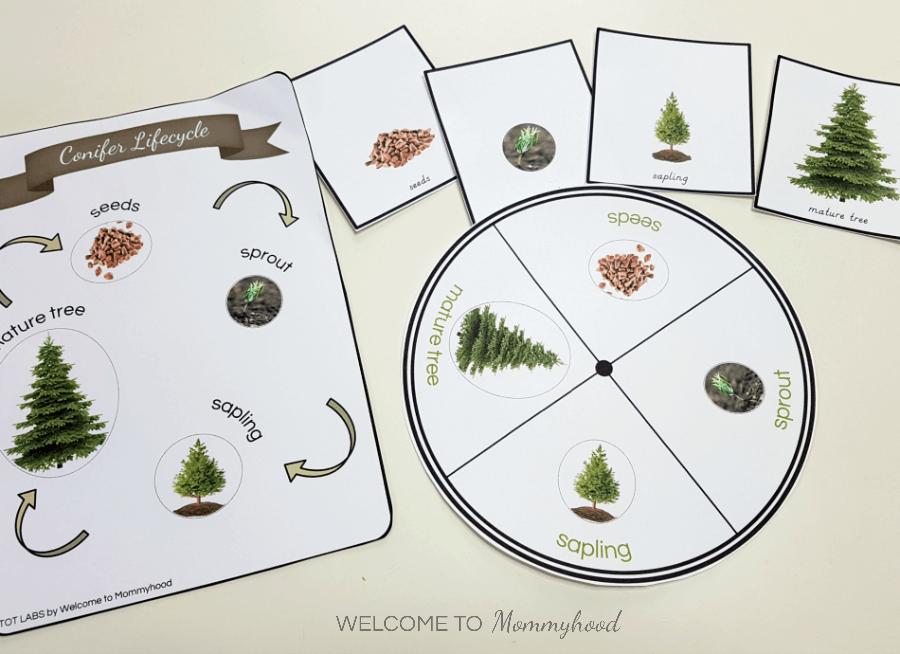 Montessori life cycle of a christmas tree printables for hands on learning - Christmas cycle 3 ...