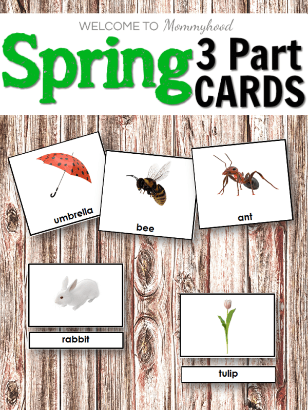 These Spring 3 Part Cards are perfect for your Montessori spring themed shelves. Children will be so interested to see beautiful images of spring!