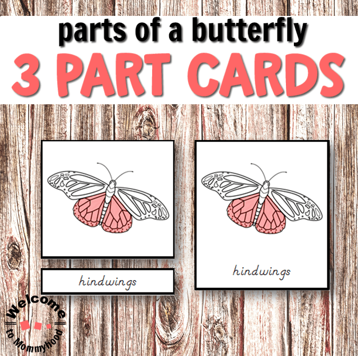 Use these beautiful butterfly cards to teach your students about the parts of a butterfly! Spring is the perfect time to teach enthusiastic and curious children about butterflies. They will be so interested to learn the names of the different parts of a butterfly!