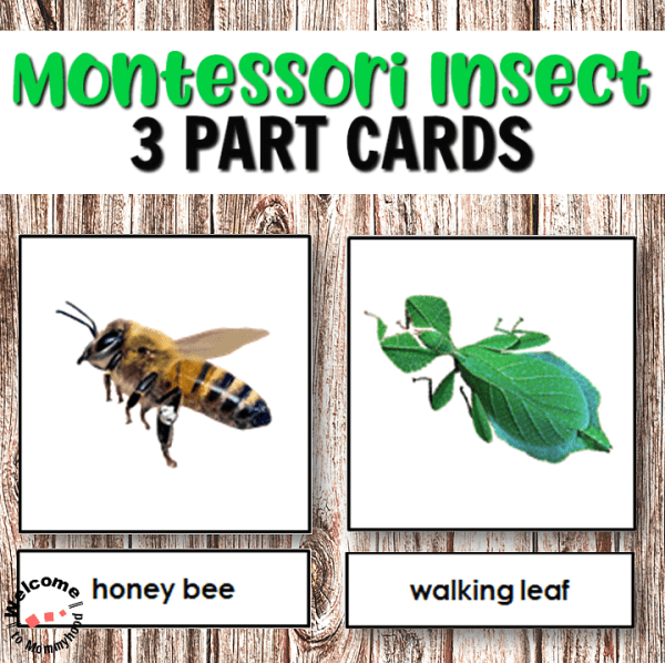 Montessori Insects 3 Part Cards Cover