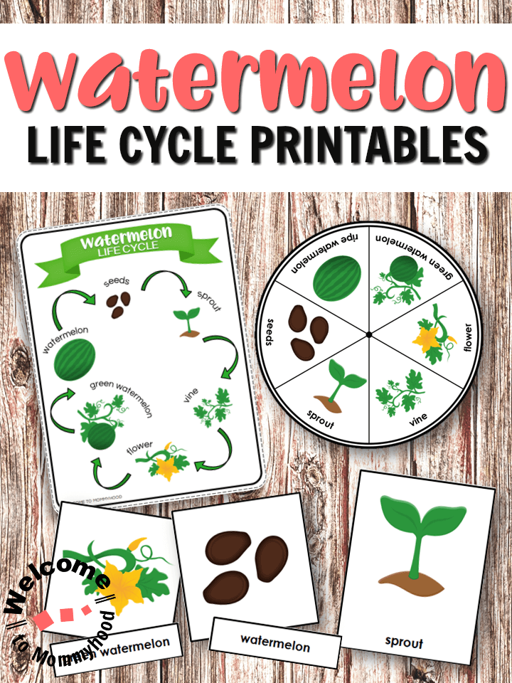 Watermelon Life Cycle Printables for Handson Activities