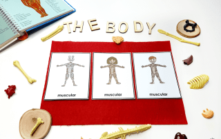 Use these fantastic human body activities to create hands-on learning activities your students will love! Perfect for Halloween learning activities!