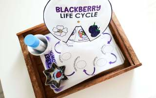 Montessori Inspired Blackberry Life Cycle Activities