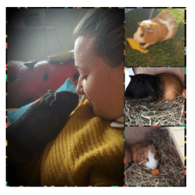 sophie-and-guinea-pigs