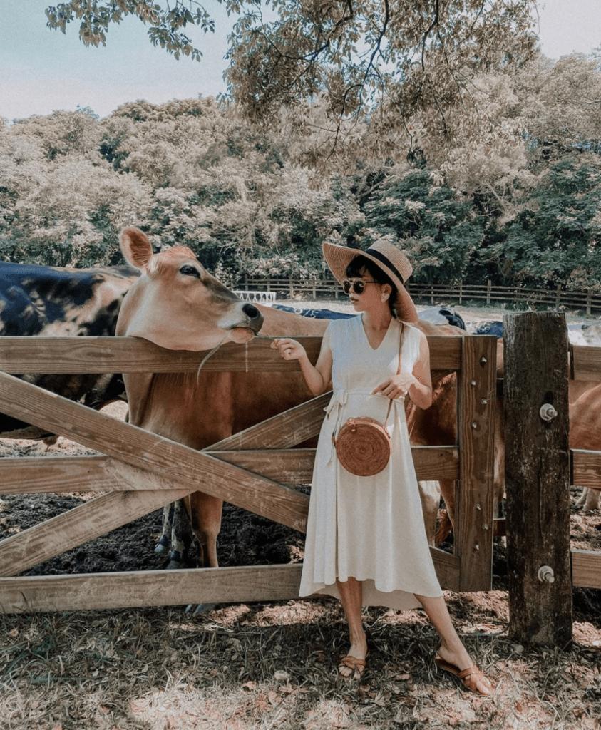 苗栗 飛牛牧場
