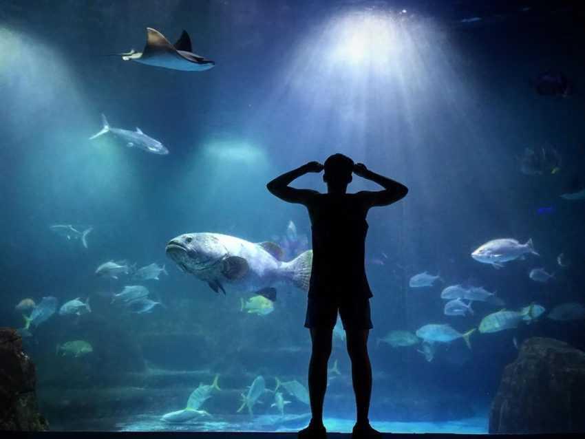 遠雄海洋公園@hong yong wu 全台水族館攻略 全台水族館攻略|全台 5 座水族館你都去過嗎?從北到南、從東到離島,全民一起瘋水族館! 2021