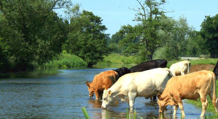 موضوع تعبير عن أهمية الماء للإنسان والحيوان والنبات