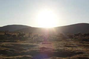Tsaganuur reindeer nomads