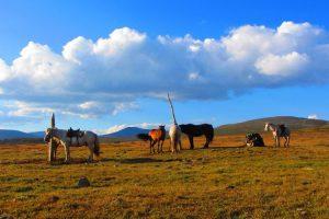 Tsaganuur nomads herders