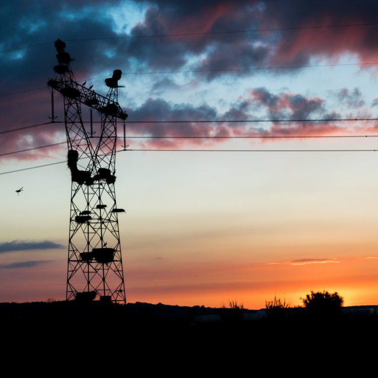 ooievaars in een elektriciteitsmast bij zonsondergang