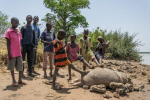 Group of children around a dead hippo baby