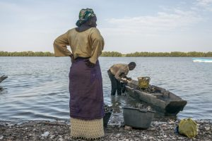 Women cleaning oysters in Gambia