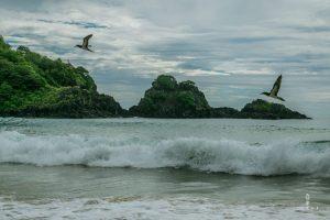 Birds flying over the water in Fernando de Noronha