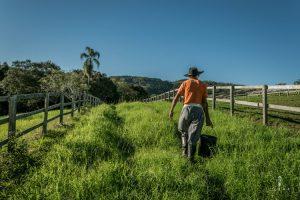 Brazilian gaucho walking through the fields