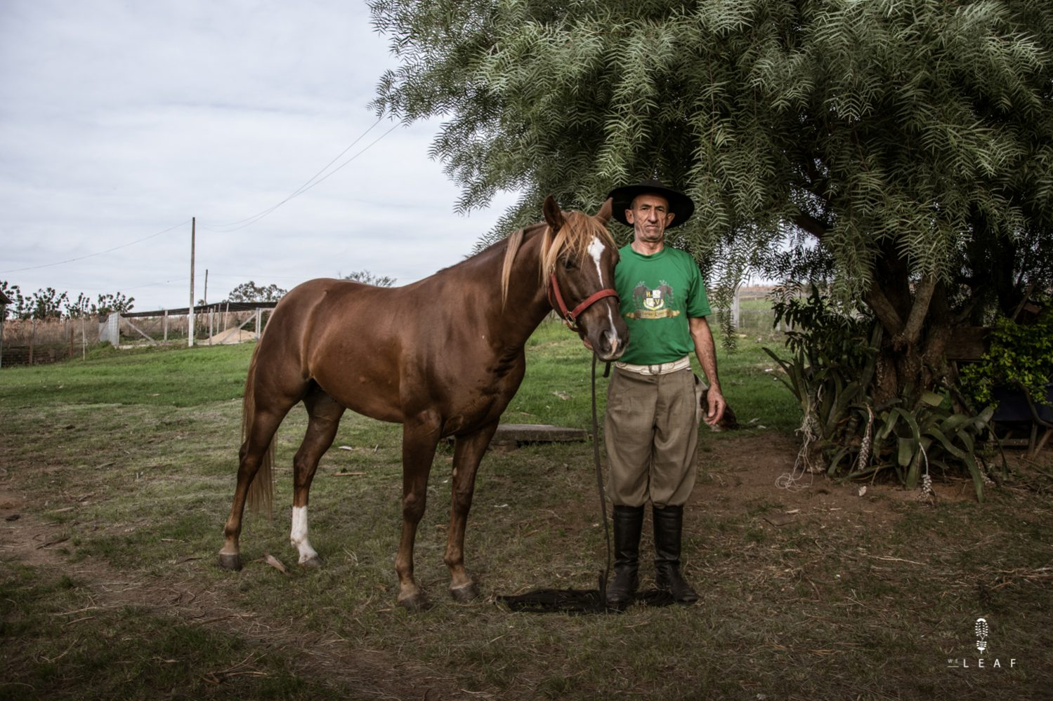 Traditional Brazilian gaucho with his horse