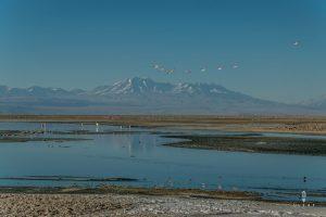 Penguins flying in the Salar de Atacama in Chile