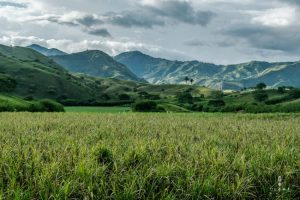 Sugar cane fields in Colombia