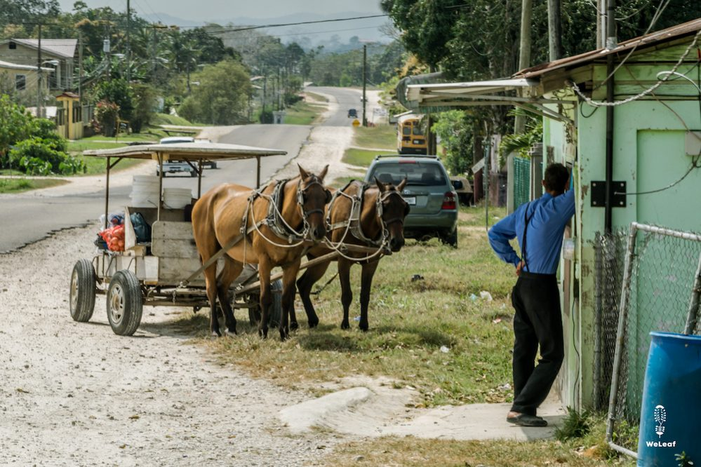 Mennonites with horse and cart in Belize