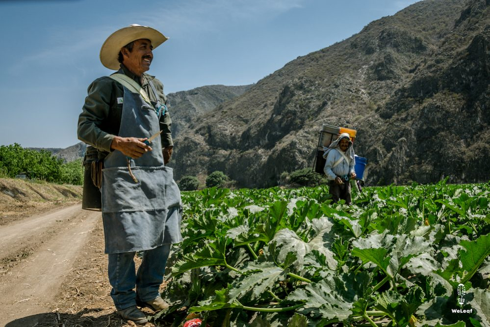 zuccini farmers in Mexico