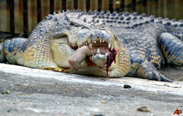 Crocs Cuisine