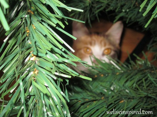 Cat peeking through Christmas Tree