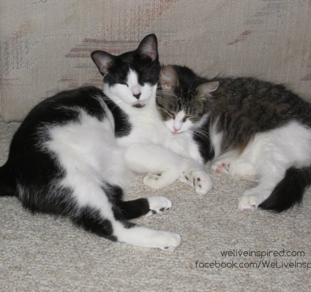 cats cuddled up together