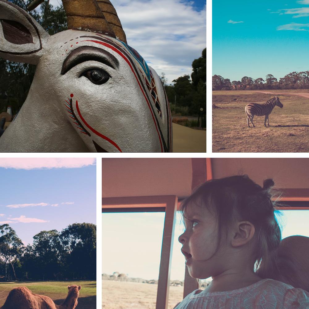 safari_collage