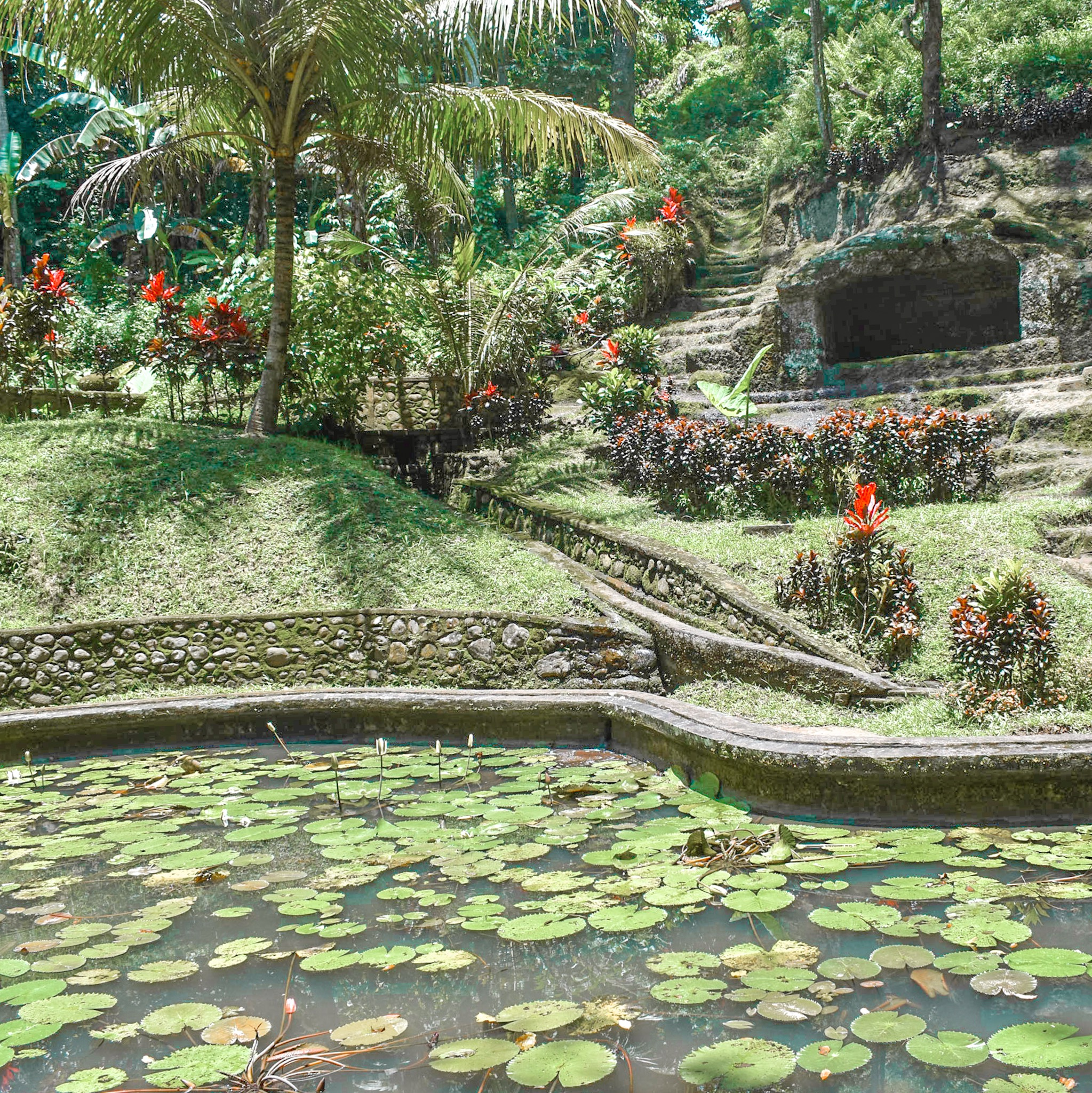 Lily Ponds and Jungle at the Elephant Cave Temple in BAli