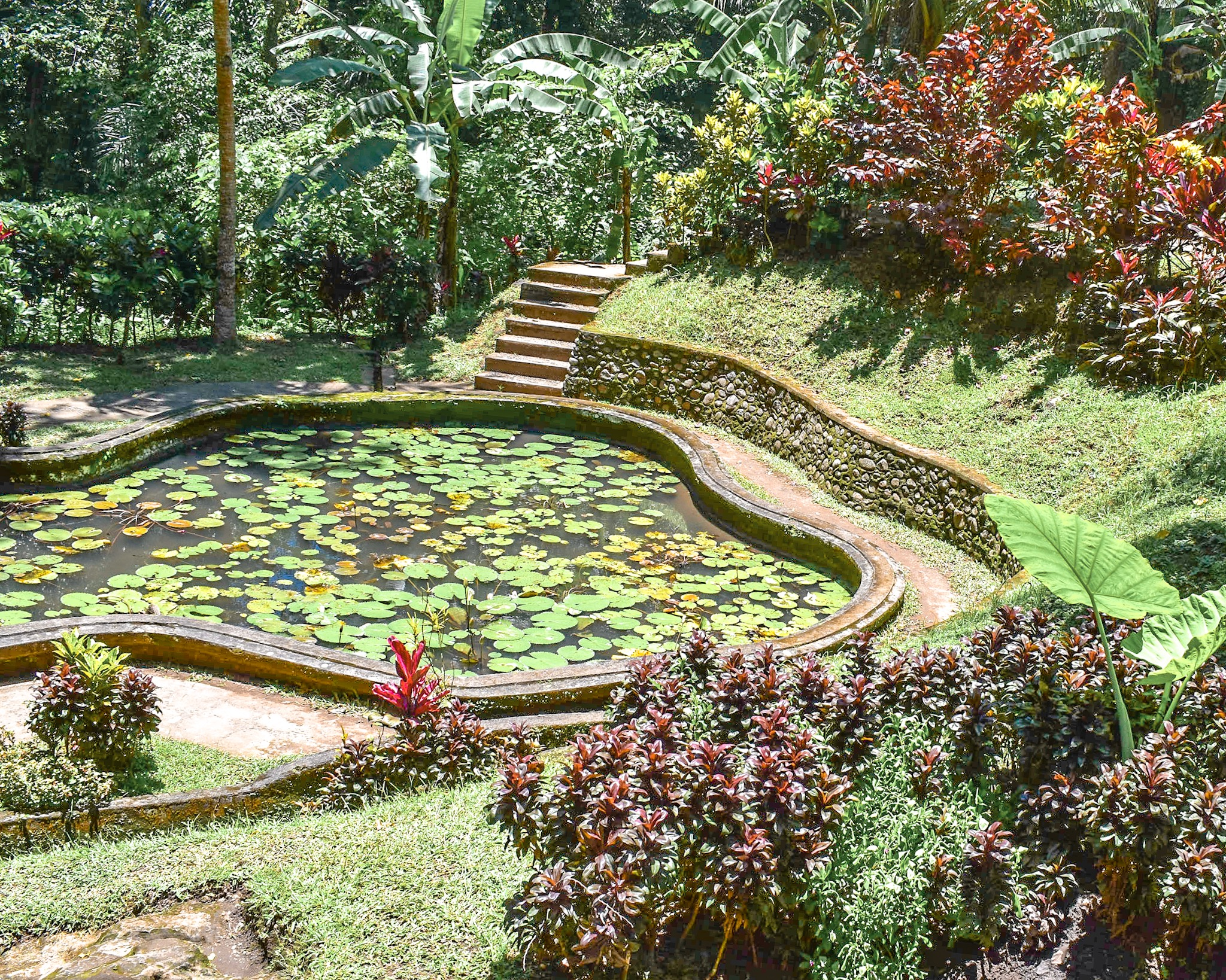 Lily Pond at the Elephant Cave Temple in Bali