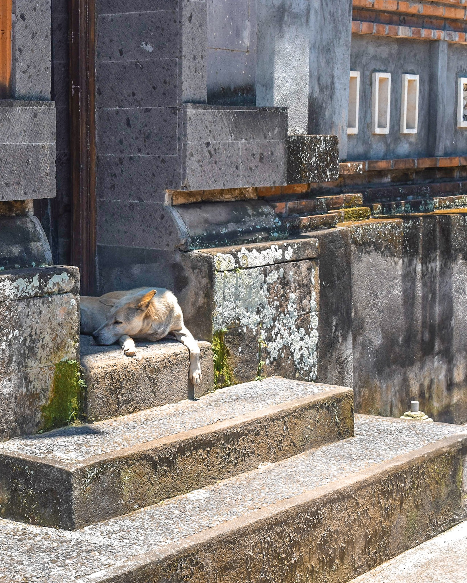 Dog Guards the Entrance to a Traditional Balinese Home