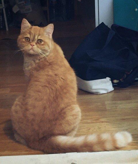 중성화(1) – 고양이, 강아지 중성화에 대한 찬반 의견