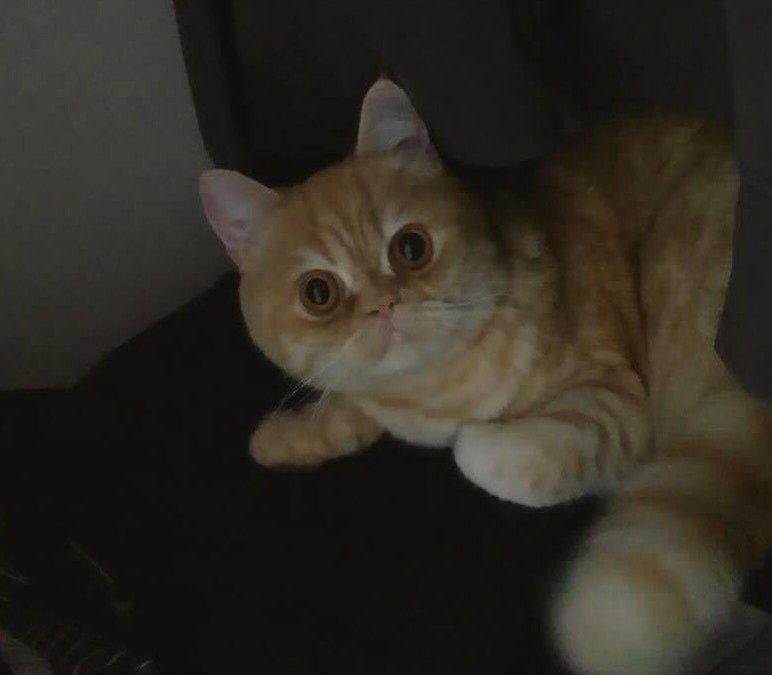 고양이 스케일링 후기 2편