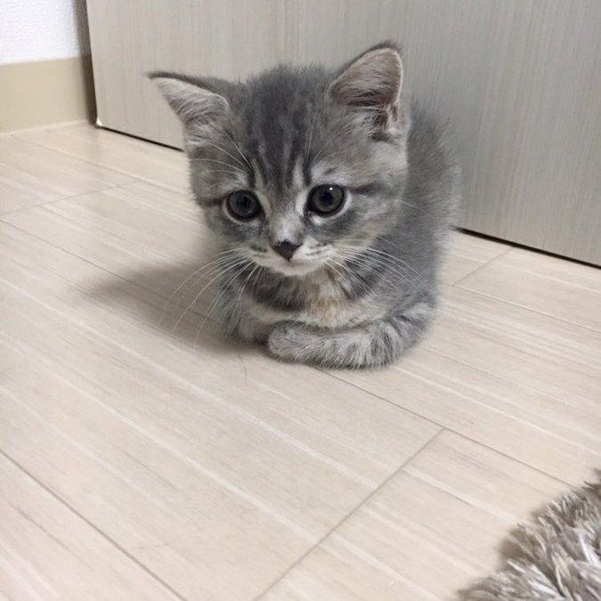 고양이 1년 반만의 변화